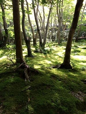 kyoto2014_13